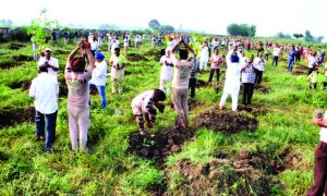 Sadh Sangat, Celebrated, Avtar Day, About, 25 Lakh, Saplings, Planted