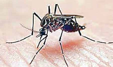 Dengue Runs, District, Chief Minister, Dung