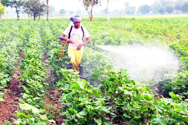 Lack of planning for agriculture