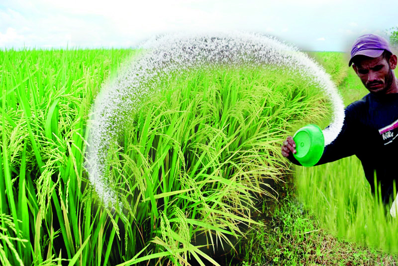 Pest management, Greater Yieldm Paddy Crop, Article