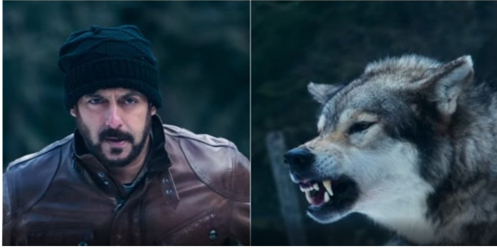 Salman Khan, Person, Tiger Zinda Hai, Dangerous, Scenes, Movie