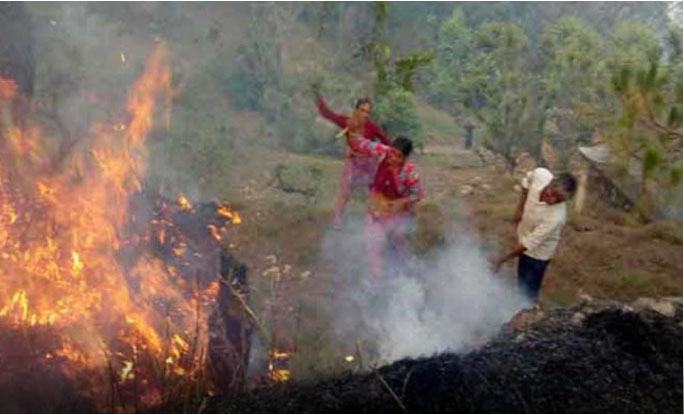 Fire in Forest, Crisis on Animals