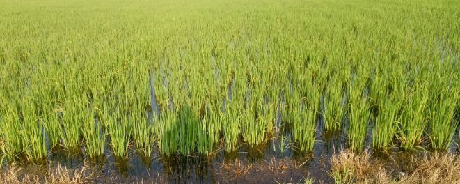 Government, Responsible, Submersible, Crops, Under, Water, AAP