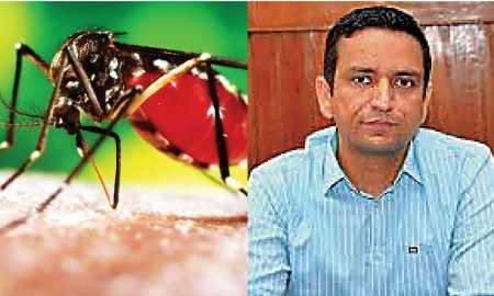 Figures, Dengue, Victims, Sangrur, Reached, Near 250
