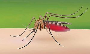 Dengue, Free Treatment, Available, Government Hospitals