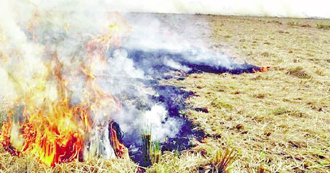 Government Schools, Today, Problem Not Setting, Fire Refreshing, Paddy, Straw Washed