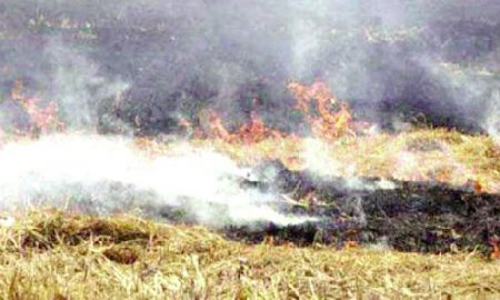 Farmers, Burn, Straw Fight, Panchayat Elections