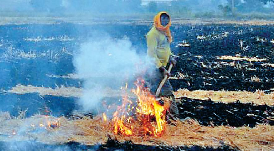 LPG, Burners, Free Electricity, Agriculture