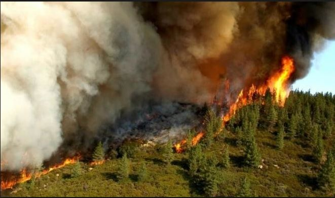 9 Dead, Fire, California, Forests