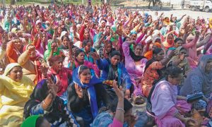 Midday meal, Women, Planted, Patiala