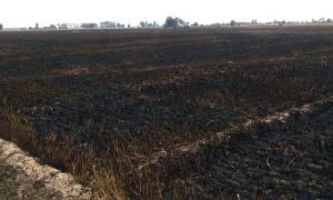 Fire, 100 acres, Wheat