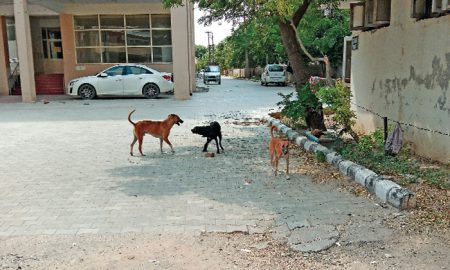 Doctors, Patient, Sulaeange, Rajindra Hospital, Dogs