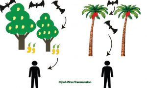 Health, Mechanism, Failure, NipahVirus