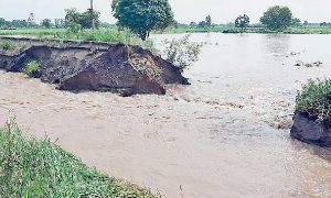 Hundreds, Crores, Rupees, Crushed, Farmers, Malwa