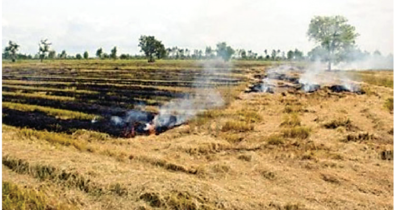 Two hundred ,Acres,District, Sangrur,Planted,Fire