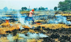 Punjab, Government, Releases , Rs. 19 crore , non-Straw, Farmers