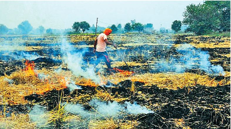 Punjab, Government, Releases , Rs. 19 crore, non-Straw, Farmers
