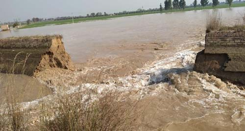Malook Poora Minor broken, hundreds of acres of wheat and other crops drowned